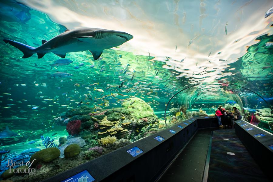 Ripleys Aquarium Bestoftoronto 2013 022